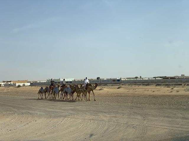 Our Trip to Dubai -- The 4th Day -- The Atlantis Aquarium and a desert safari-第9张图片-Celia的博客