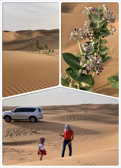Our Trip to Dubai -- The 4th Day -- The Atlantis Aquarium and a desert safari-第11张图片-Celia的博客